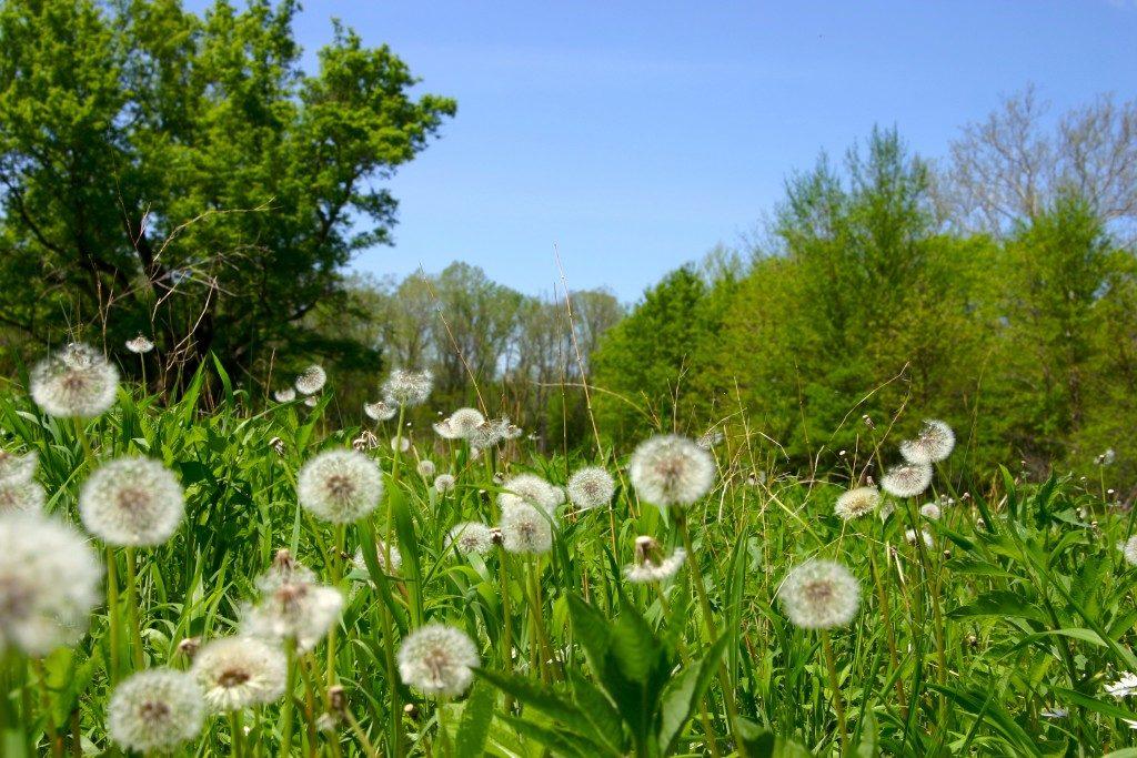 Trápí vás jarní alergie?