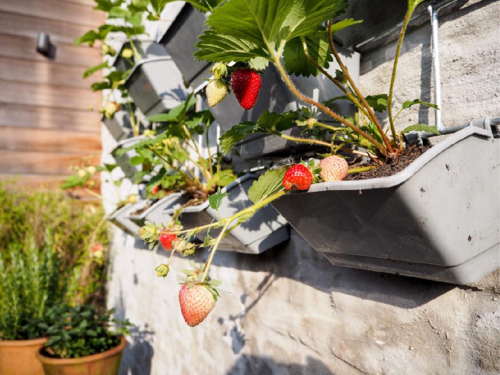 Jak si doma založit vlastní zahradu?